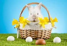 Easter Bunny. Easter motive. White Easter Bunny royalty free stock photo
