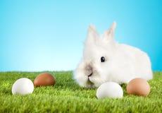 Easter Bunny. Easter motive. White Easter Bunny Stock Image