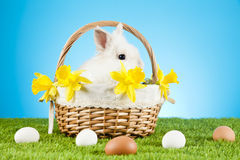 Easter Bunny. Easter motive. White Easter Bunny Royalty Free Stock Images