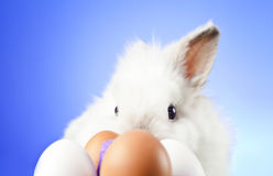Easter Bunny. Easter motive. White Easter Bunny Royalty Free Stock Photos