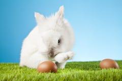 Easter Bunny. Easter motive. White Easter Bunny Stock Images