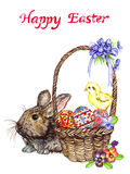 Easter bunny near basket with eggs with traditional painting, chick and spring flowers: pansies and violets, Happy Easter Royalty Free Stock Photography