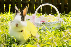 Easter bunny near a basket Royalty Free Stock Photos