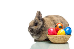 Easter bunny near colorful Easter eggs Royalty Free Stock Photo