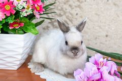 Easter bunny near spring wreath. Stock Images