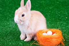 Easter bunny and nestle Royalty Free Stock Photos