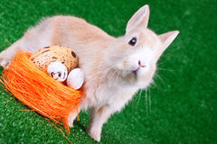 Easter bunny and nestle with eggs Royalty Free Stock Images