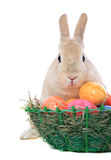 Easter bunny next to easter egg Stock Image
