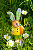 Easter bunny outdoor in spring Stock Photos