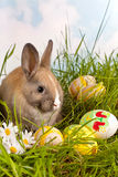 Easter bunny and painted eggs Stock Images