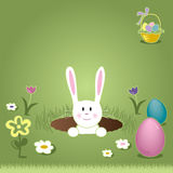 Easter Bunny Peaking Out of Hole Royalty Free Stock Images