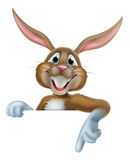 Easter Bunny Pointing Stock Images