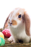 Easter bunny portrait Stock Image