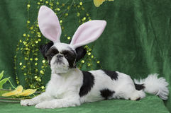 Easter bunny puppy. Stock Photography