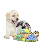 Easter bunny and puppy Royalty Free Stock Image