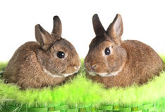 Easter bunny rabbit Royalty Free Stock Images