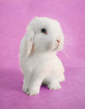 Easter Bunny rabbit stock photo