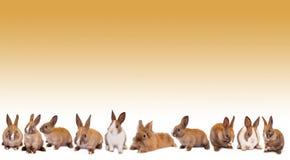 Easter bunny rabbit border Royalty Free Stock Image