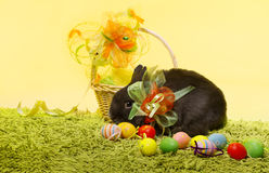 Easter bunny rabbit, Easter basket eggs Stock Photos