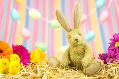 Easter bunny rabbit, fresh flowers eggs and stripes background. Royalty Free Stock Images