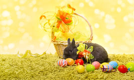 Easter bunny rabbit and holiday basket eggs Royalty Free Stock Photo
