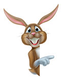 Easter Bunny Rabbit Pointing Royalty Free Stock Photos