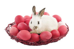 Easter bunny with red eggs. Easter bunny in a basket with red eggs, isolated on white Royalty Free Stock Photo