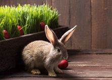 Easter bunny with red eggs. Cute easter bunny with red easter eggs Royalty Free Stock Photos