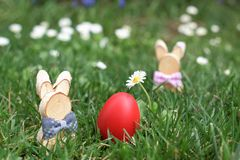 Easter Bunny and red hen Easter egg in a grass. Among deisies stock photo