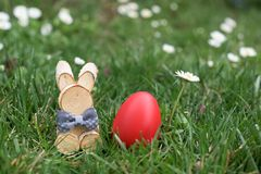 Easter Bunny and red hen Easter egg in a grass and deisies. Easter Bunny and red hen Easter egg in a grass among deisies royalty free stock photography