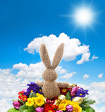 Easter bunny with shiny eggs and colorful primula flowers Royalty Free Stock Images