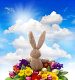 Easter bunny with shiny eggs, colorful primula Royalty Free Stock Photo