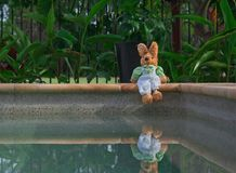 Easter Bunny is sitting by the swimming pool Stock Image