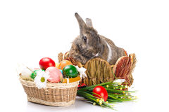 Easter bunny sitting in a baske Royalty Free Stock Photography