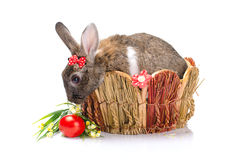 Easter bunny sitting in a baske Royalty Free Stock Image