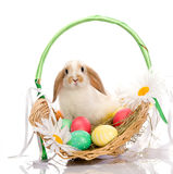 Easter Bunny sitting in basket royalty free stock photos