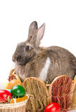 Easter bunny sitting in basket Stock Photography