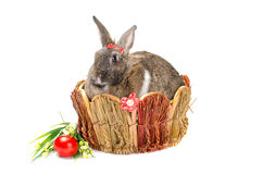 Easter bunny sitting in basket Royalty Free Stock Images