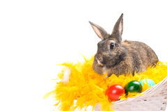 Easter bunny sitting in basket with yellow plumage Stock Photography