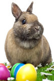 Easter bunny sitting in flower meadow with eggs Stock Photography