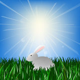 Easter Bunny sitting on green grass in the rays of the bright sun. Easter Bunny sitting on green grass in the rays of the sun Stock Illustration