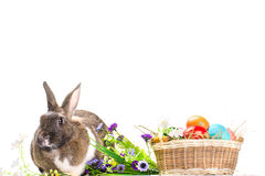 Easter bunny sitting near basket Royalty Free Stock Images