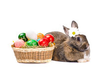Easter bunny sitting near basket Stock Image