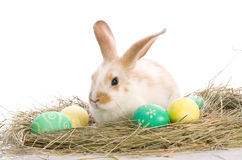 Easter Bunny is sitting near the colorful eggs Stock Photo