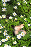 Easter bunny sitting between spring snowflakes Royalty Free Stock Image