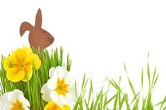 Easter Bunny and spring flower Royalty Free Stock Image