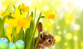 Easter Bunny. And spring meadow Royalty Free Stock Photo