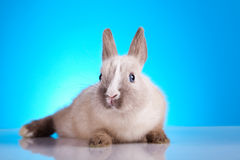 Easter Bunny, springtime colorful bright theme Royalty Free Stock Images