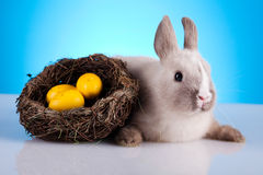 Easter Bunny, springtime colorful bright theme Royalty Free Stock Image