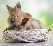 Easter Bunny, springtime colorful bright theme Royalty Free Stock Photos